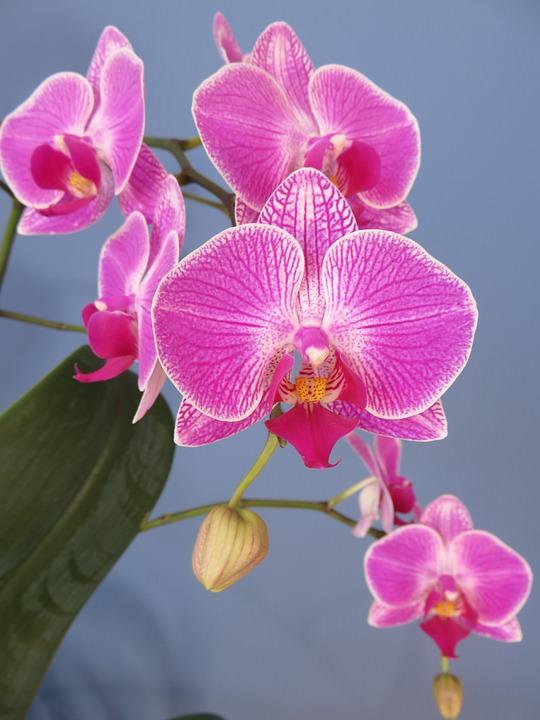 vidy-orhidej-03