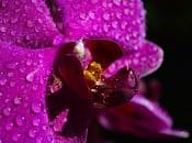 vidy-orhidej-04