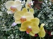 vidy-orhidej-07