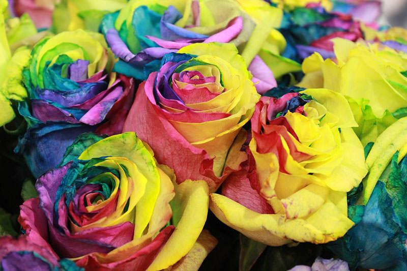 7-е место Самые дорогие цветы в мире