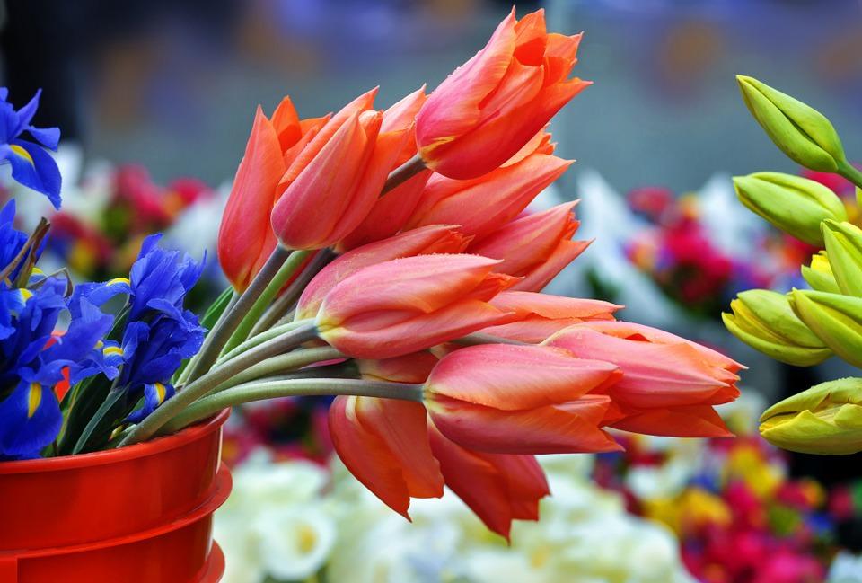 Свадебные букеты из тюльпанов: 100 фото самых красивых букетов из