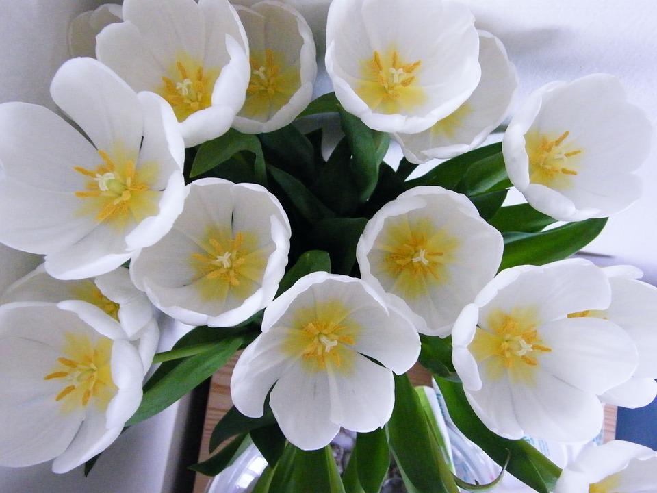Свадебные букеты из тюльпанов фото галерея