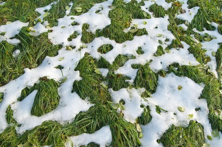 Снег на газоне
