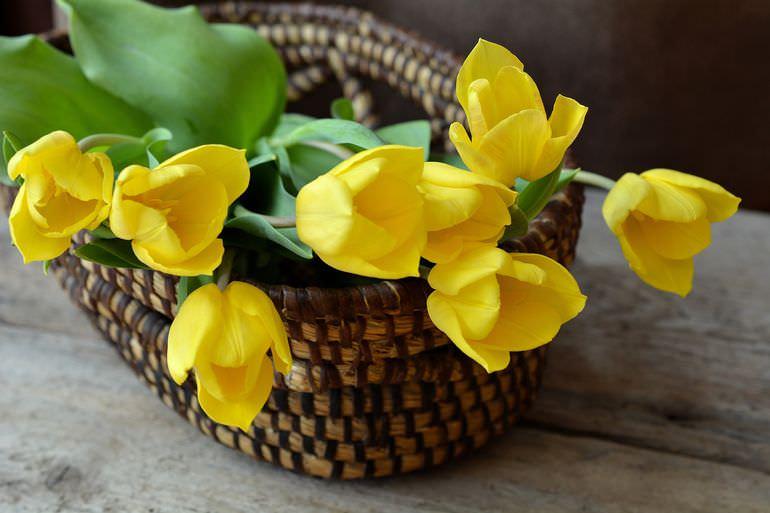 Желтые тюльпаны