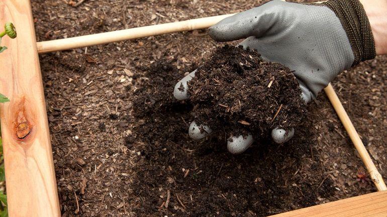 Как правильно посадить хризантему осенью