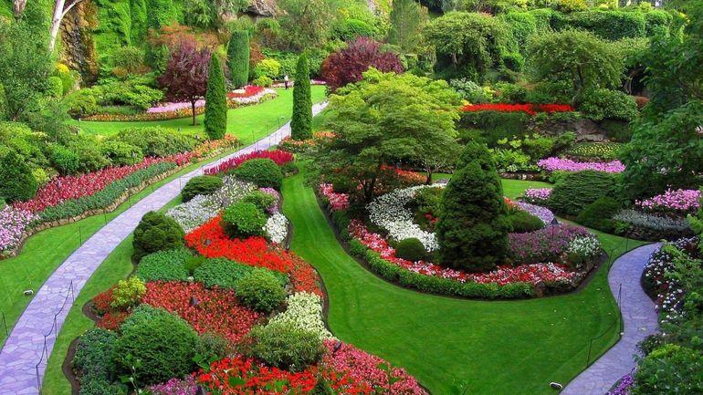 Гвоздика травянка в ландшафтном дизайне