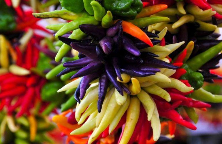Выращивание перца огонек на подоконнике