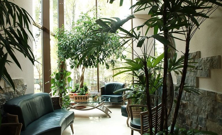 Комнатные растения для больших помещений