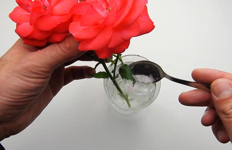 Добавки в воду для роз