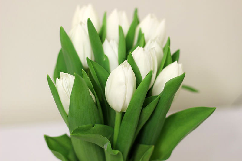 Цветы в подарок девушке и женщине