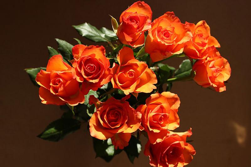 cvety-v-podarok-10