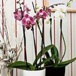 Как разместить цветы: оранжерея дома