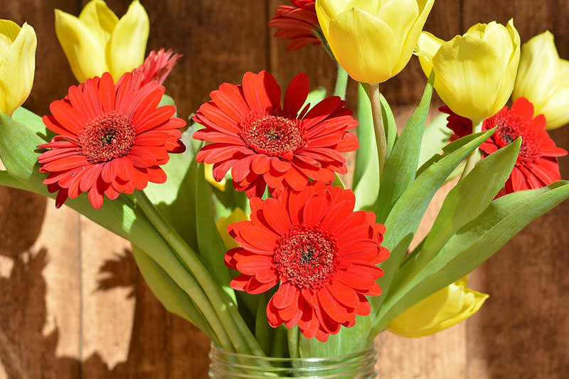 срезанные цветы - как ухаживать и сохранить цветы