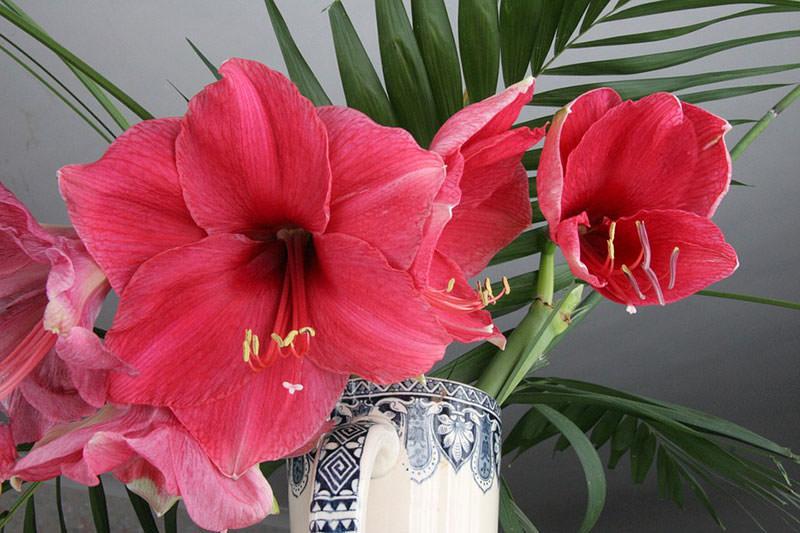 срезанные цветы в вазе
