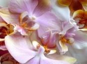 vidy-orhidej-05