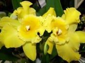 vidy-orhidej-20