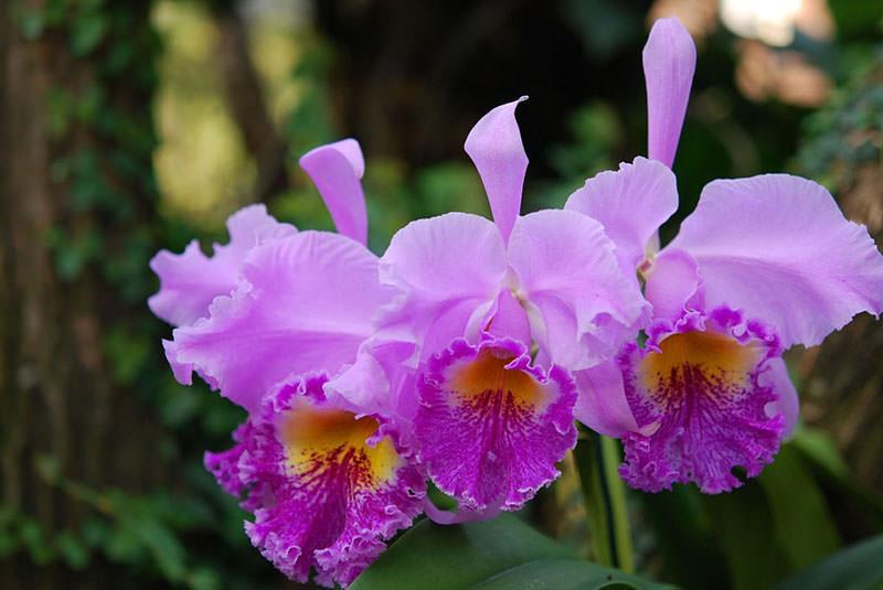 vidy-orhidej-22