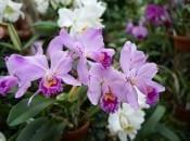 vidy-orhidej-23