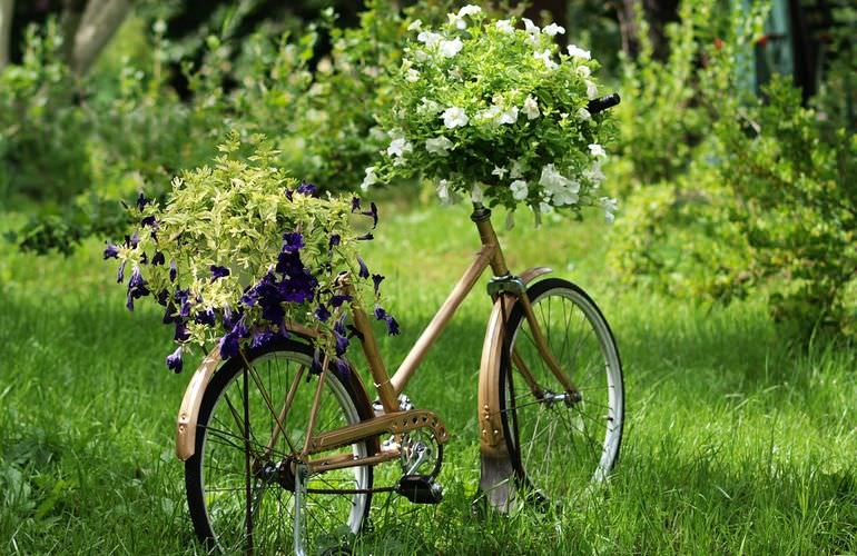 Клумба в велосипеде