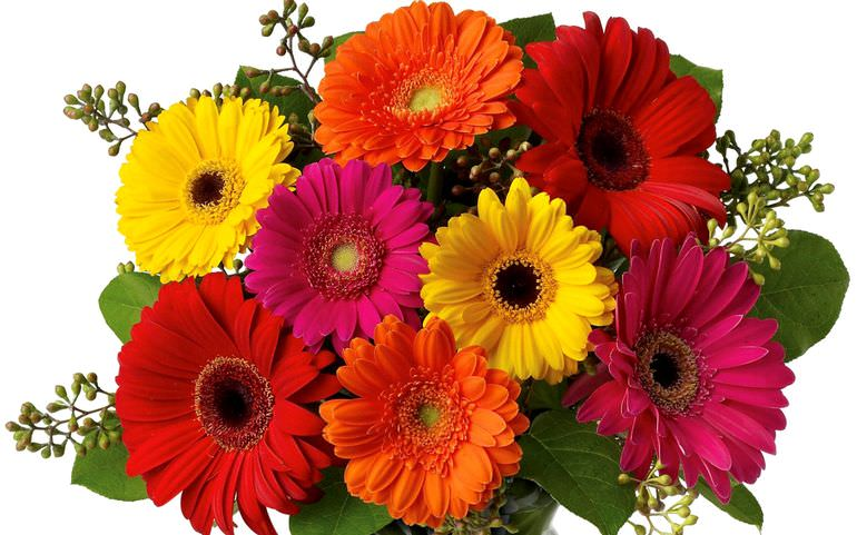 Букет из разноцветных гербер