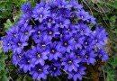 Неприхотливые цветы многолетники для сада