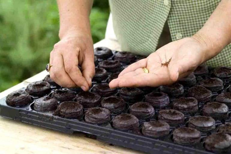 Посе семян перца в стаканчики