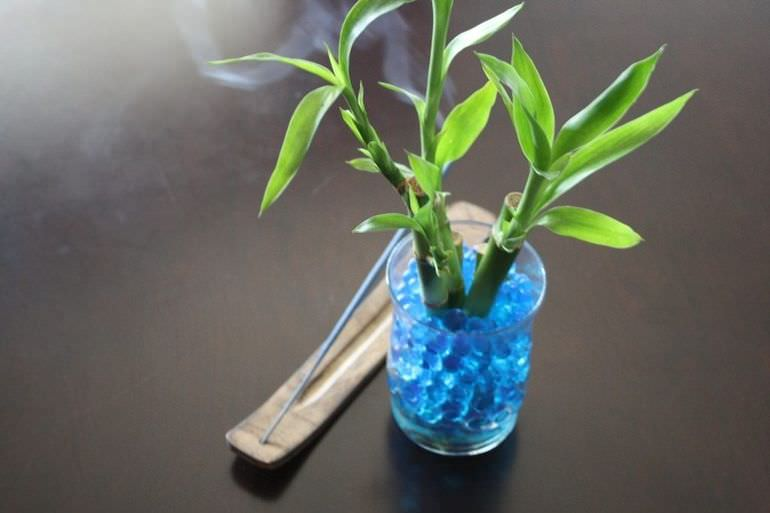 Комнатный бамбук в воде