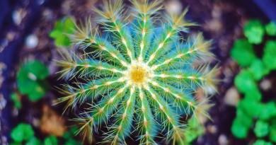 Какие бывают разновидности кактусов