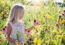 Какие цветы растут на поле