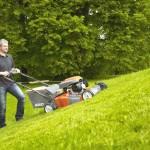 Нужно ли косить газонную траву на зиму
