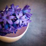 Как правильно сажать гиацинты осенью
