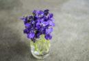 Какие цветы приносят счастье в дом