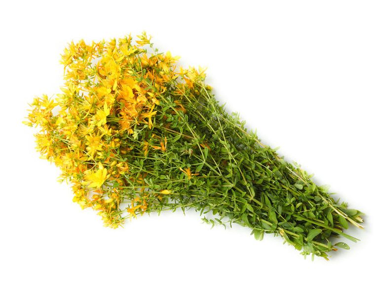 Пучок травы зверобоя
