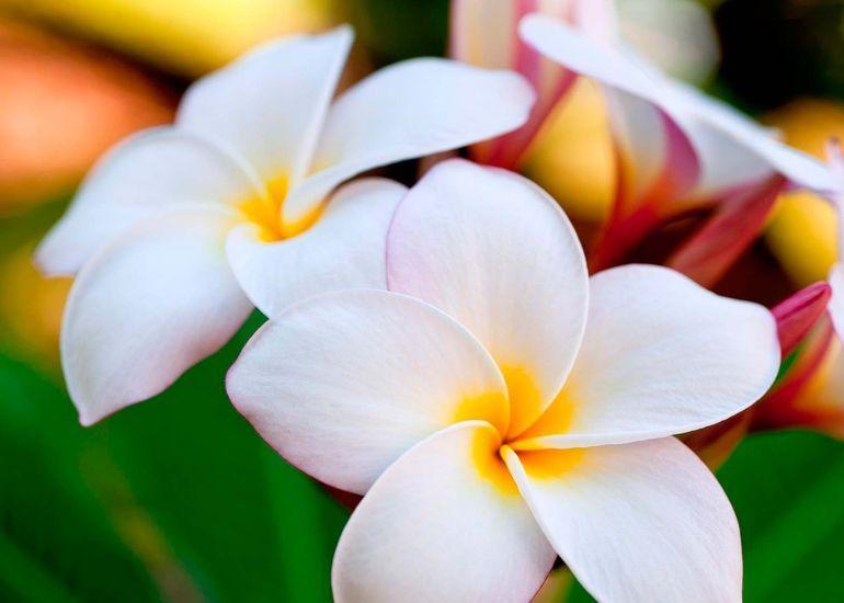 Гавайская