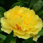 Цветы желтого цвета названия и фото