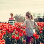Уход и посадка тюльпанов