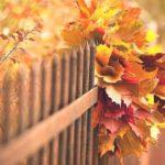 Как сделать красивый букет из листьев