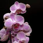 Как ухаживать за орхидеями в горшке