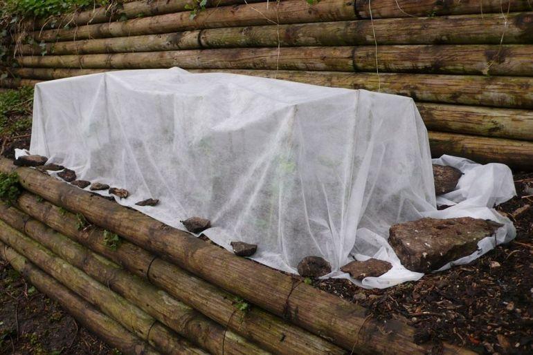 Укрывание плетистой розы на зиму