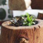 Подходят ли цветам деревянные горшки