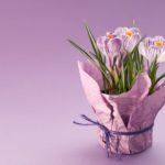 Уход за домашними цветами в горшках