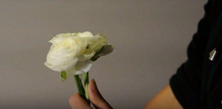 Мелкие бутоны белой розы