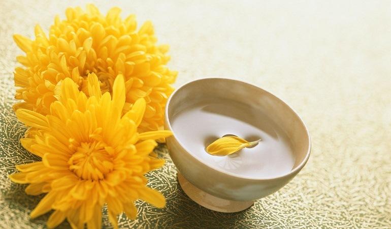 Полезные свойства хризантем