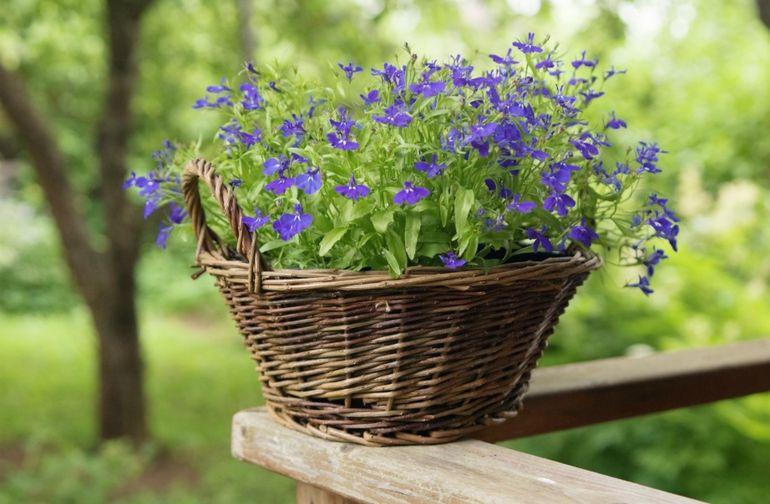 Кашпо для цветов из лозы
