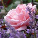 Название цветов, которые пахнут