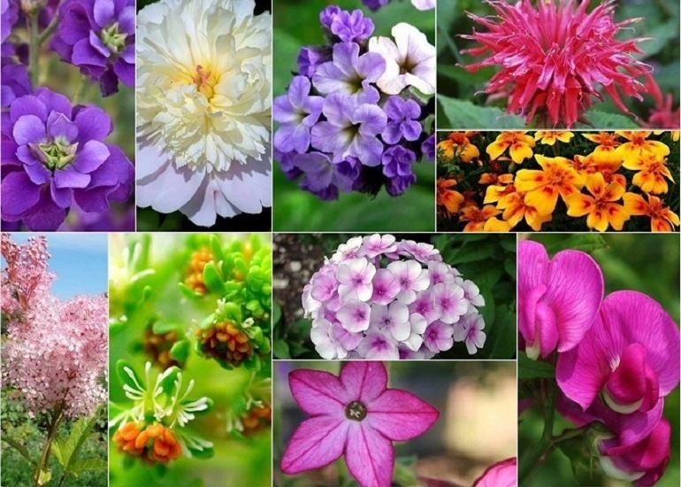 Цветы с приятным ароматом