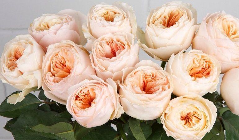 Пионовидные сорта роз