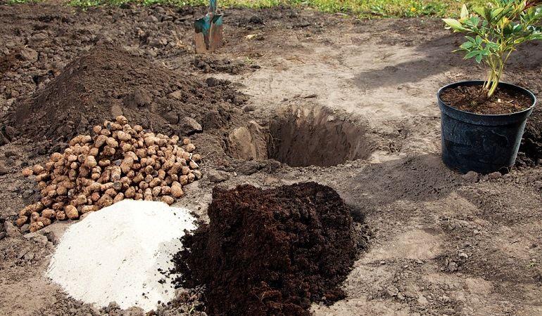 Варианты посева семян древовидных пионов