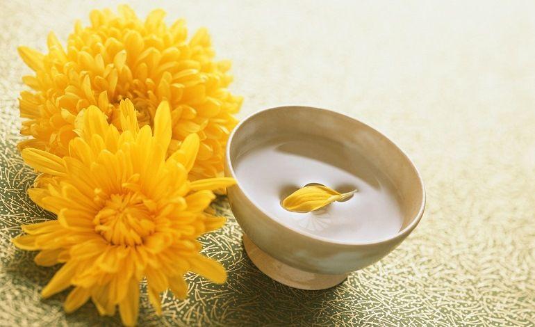 Полезные свойства хризантемы