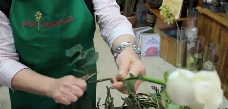 Очистить стебли розы от листьев